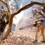 [fr]Le travail de Kalanexpo en brousse[en]Kalanexpo's work in the bush